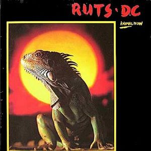 The Ruts Animal Now, 1981